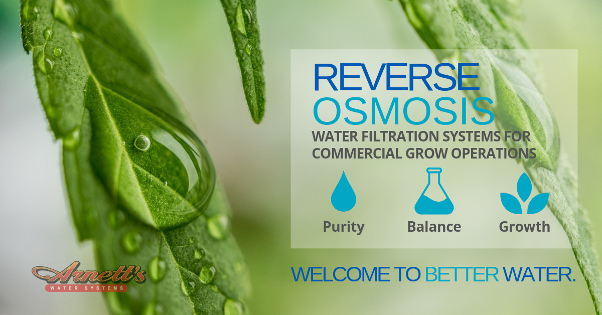 By removing chemicals and keeping pH levels stable, RO filtered water for commercial grow operations optimizes production in terms of quality and quantity.
